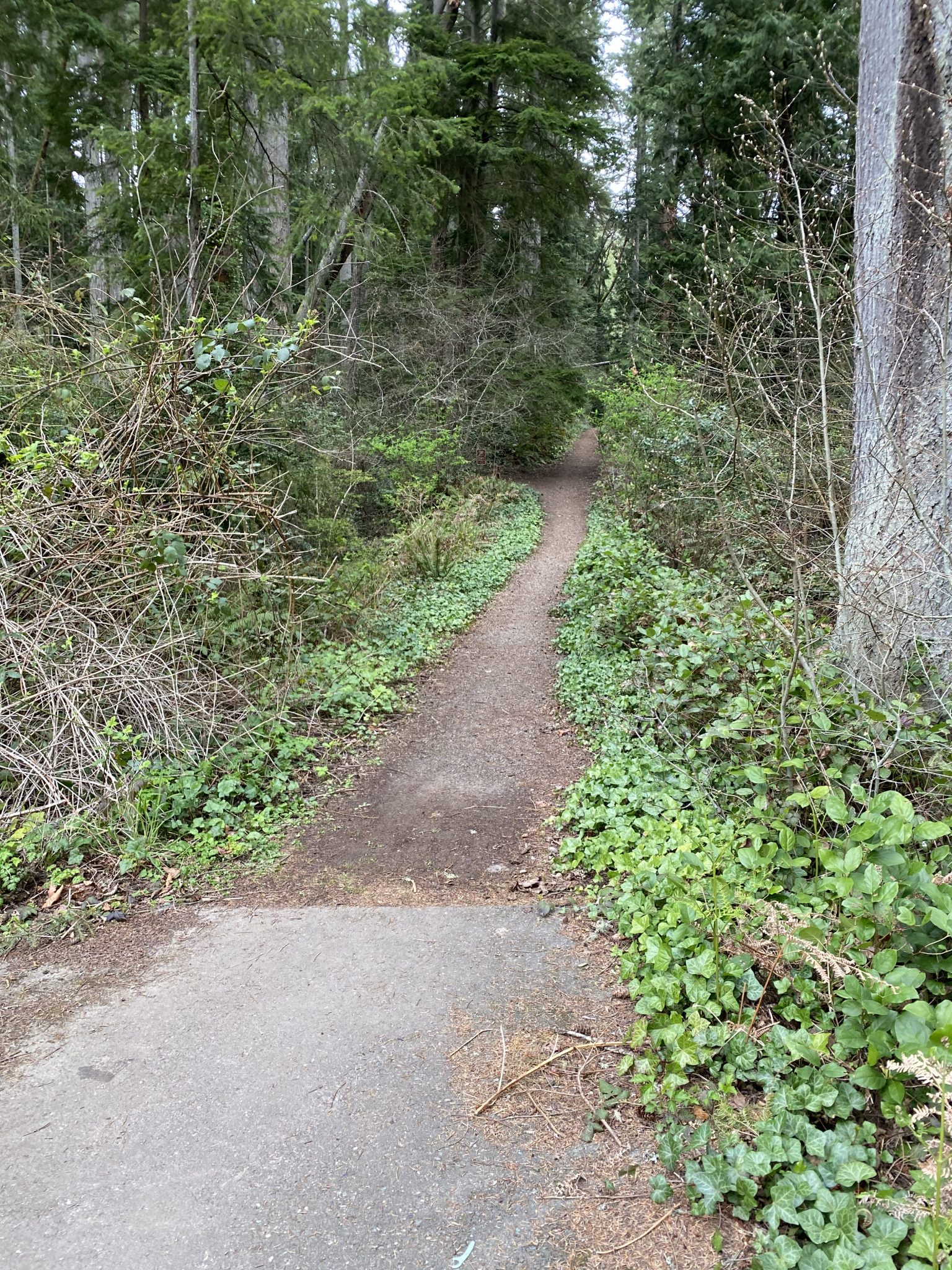 Peters Trail, Bainbridge Island