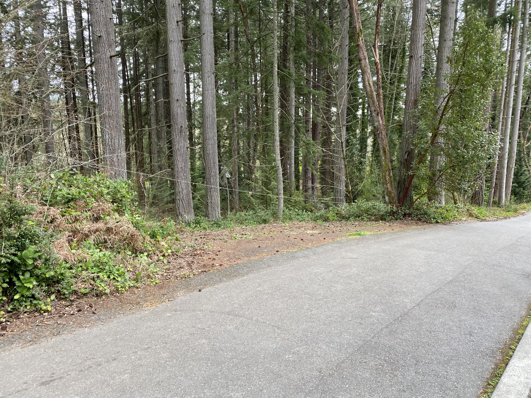 Peters Trail Parking on Listening Lane, Bainbridge Island