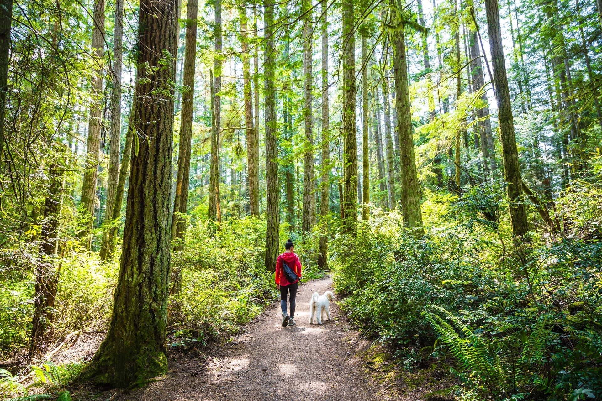 Nature & Birding Itinerary, Bainbridge Island, Grand Forest Park Trails