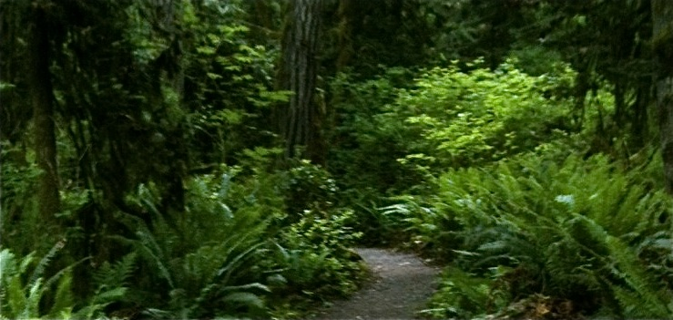 What's the best hike on Bainbridge Island?